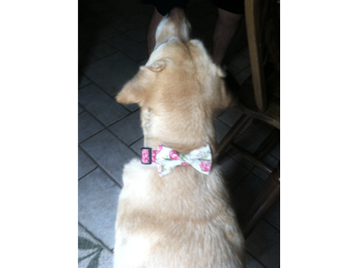 Jessie with a Collar Bow