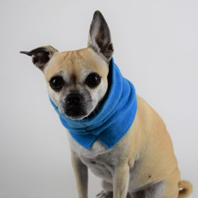 Neck Warmer in Rocket Blue
