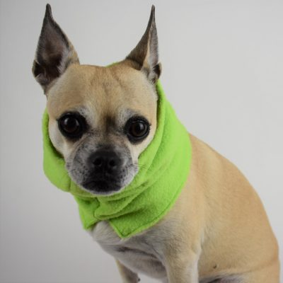 Neck Warmer in Lime Green