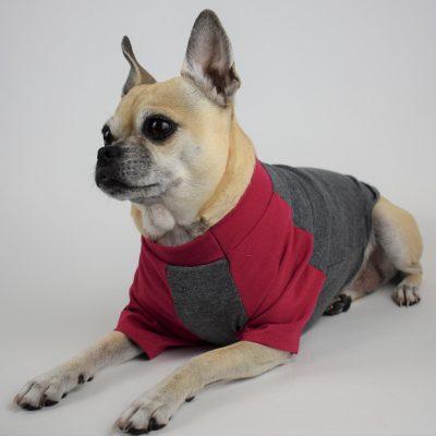 Raglan Sleeve Dog T-Shirt in Charcoal and Fuchsia