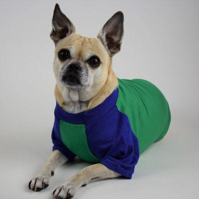 Raglan Sleeve Dog T-Shirt in Cobalt Blue and Kelly Green